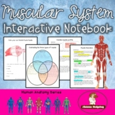 Muscular System Interactive Notebook