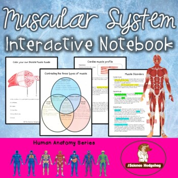 Muscular System Interactive Notebook By The Science Hedgehog Tpt