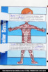Muscular System Activity, Human Body Interactive Notebook 5th Grade Craftivity