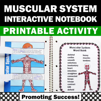 Muscular System Health, Human Body Systems Interactive Notebook Activity