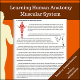 Muscular System - Learning Human Anatomy