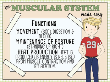 Muscular System Made Easy