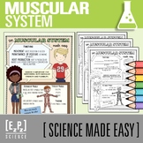 Muscular System Made Easy- Student Notes and Powerpoint
