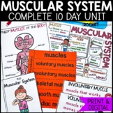 Muscular System: Mini-unit including functions, types of muscles, and more!