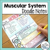 Muscular System Doodle Notes & Diagrams - Distance Learning