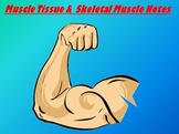 Muscular System Notes Powerpoint Package