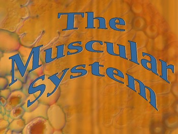 Muscular System PPT