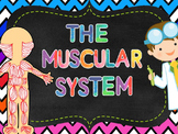 Muscular System Pack: PowerPoint, Student Notes, Fold-Ups
