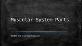 Muscular System Power Point  With Vocabulary in English an