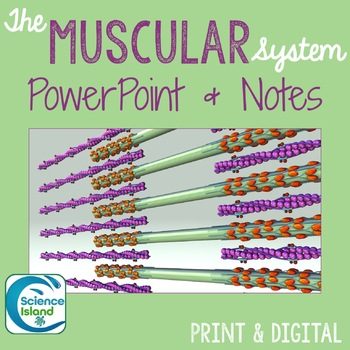 Muscular System PowerPoint Lesson and Notes - Anatomy & Physiology Power Point