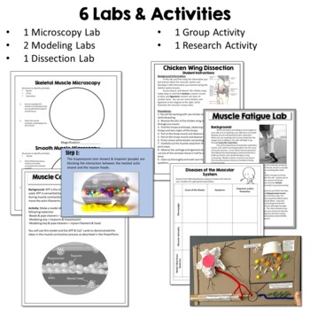 Muscular System- PowerPoint, Notes, Diagrams, & Inquiry Lab Activity
