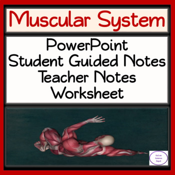 Muscular System: PowerPoint, Student Guided Notes, Worksheet