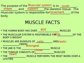 Muscular System Presentation