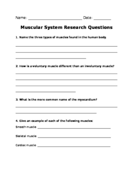 Muscular System Research Questions