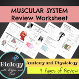 Muscular System Review Worksheet