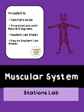 Muscular System Stations Lab