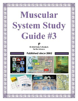 Muscular System Study Guide #3 for Human Anatomy & Physiology
