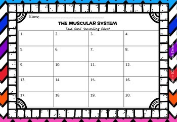 Muscular System Task Cards