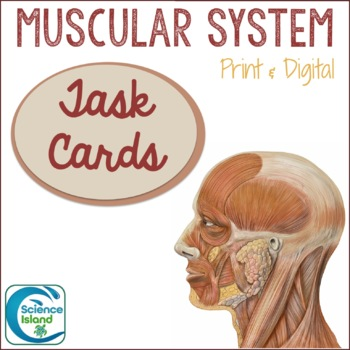 Muscular System Task Cards with PowerPoint Review
