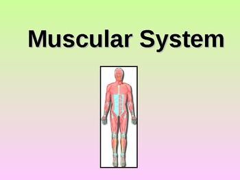 Muscular System Teacher Notes