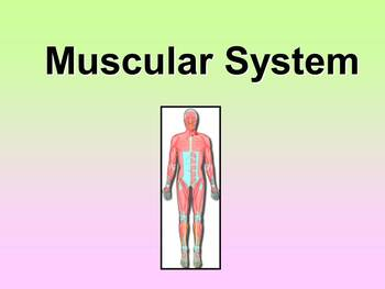 Muscular System Teacher and Student Fill-in Notes