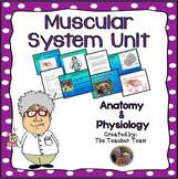 Muscular System Unit  for Anatomy and Physiology and Biology