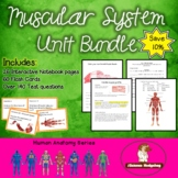 Muscular System Unit Bundle