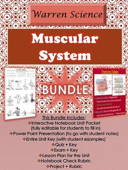 Muscular System Unit *BUNDLE *(Unit 5 in Series)