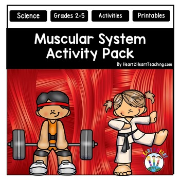 Human Body Systems: Muscular System Activities & Vocabulary Posters