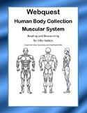 Muscular System - WebQuest:-CCSS .RI.4.1-8.1-.RI.4.2-8.2