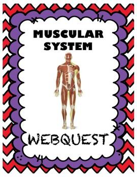 Muscular System Webquest