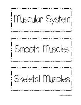 Muscular System Word Wall Words