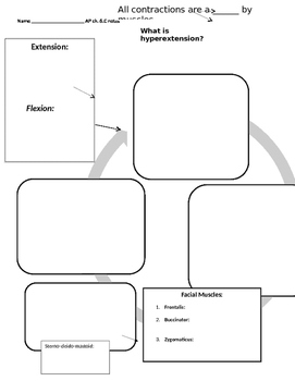 Muscular System graphic organizer, types of movement