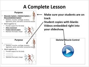 Muscular and Skeletal System - 5E Lesson Bundle