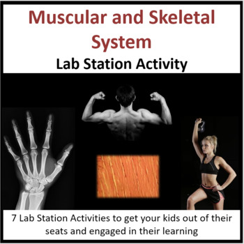 Muscular and Skeletal System - Lab Station Activity