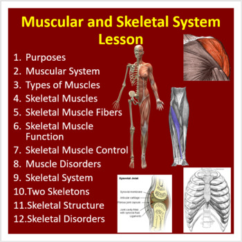 Muscular and Skeletal System - PowerPoint Lesson and Student Notes