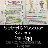 Muscular and Skeletal Systems Read and Apply Notebook Activity  {NGSS MS-LS1-3}