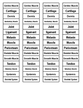 Muscular/Skeletal Systems and Skin Cut-n-Paste Vocabulary