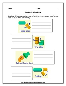 Musculoskeletal System: Joint Movement Graphic Organizer