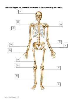 musculoskeletal system test and answer key