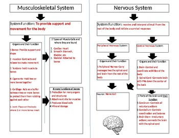 Musculoskeletal and Nervous System Graphic Organizer