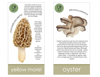Mushroom Fungi Identification Cards- Montessori