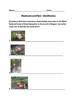 Mushroom Identification - New Hampshire lesson worksheet