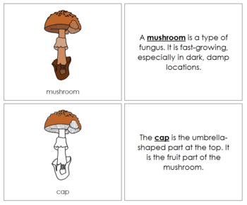 Mushroom Nomenclature Book