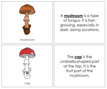Mushroom Nomenclature Book (Red)
