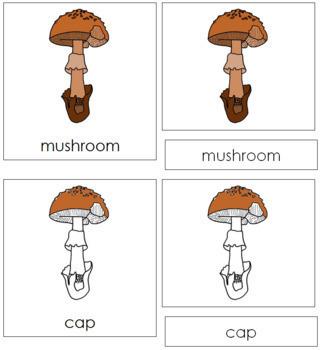 Mushroom Nomenclature Cards