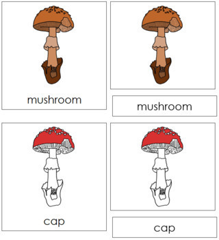 Mushroom Nomenclature Cards (Red)