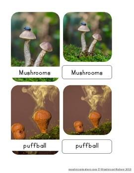 Mushrooms and Fungi Nomenclature Cards
