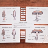 Mushrooms Pack: classroom poster, labeling activity, and v