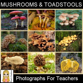 Mushrooms & Toadstools Photograph Pack